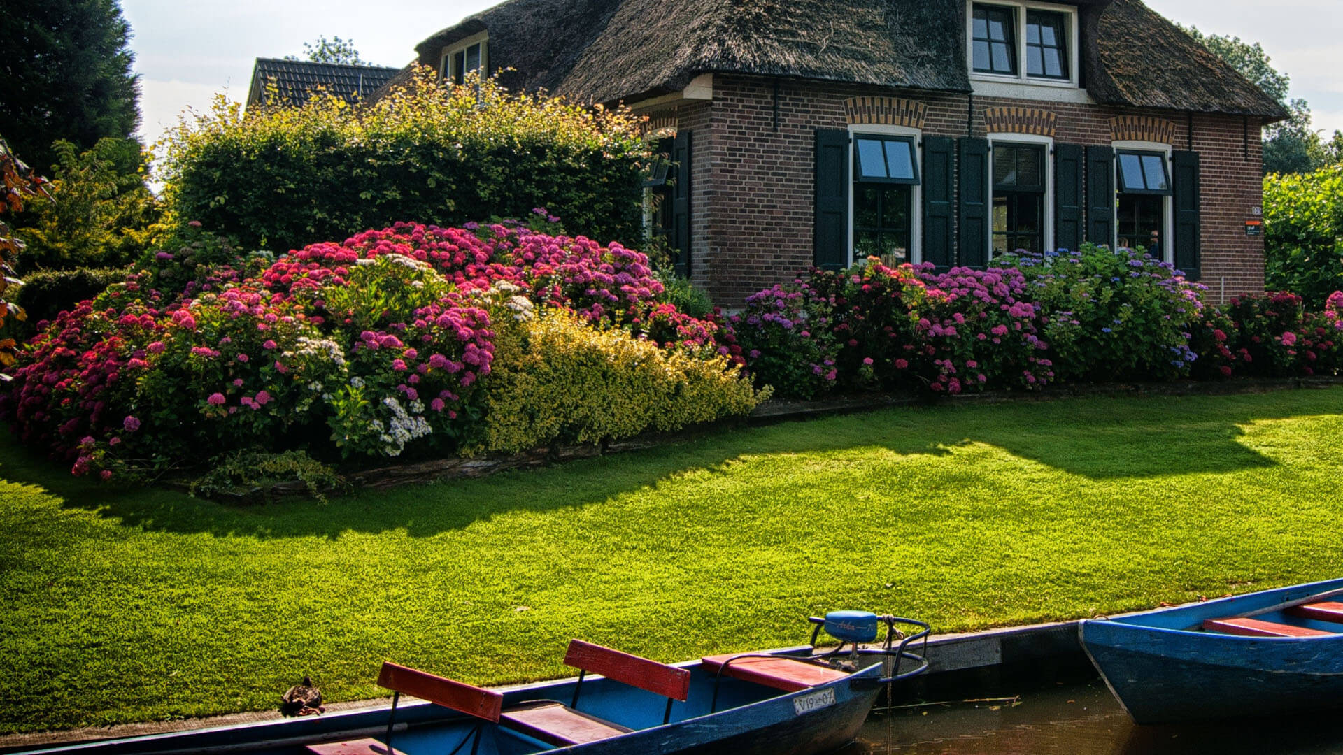 5 Reasons For Lawn Care| Blog | Lawn & Pest Control Xperts