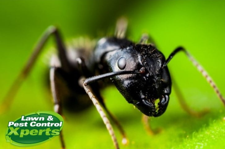 5 Reasons For Pest Control | Blog | Lawn & Pest Control Xperts