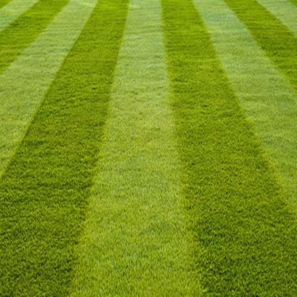 Lawn Mowing | Lawn & Pest Control Xperts