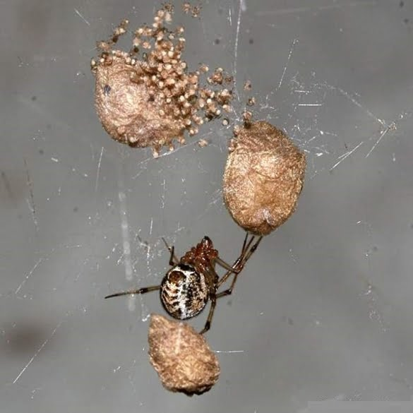 Spider Control | Lawn & Pest Control Xperts