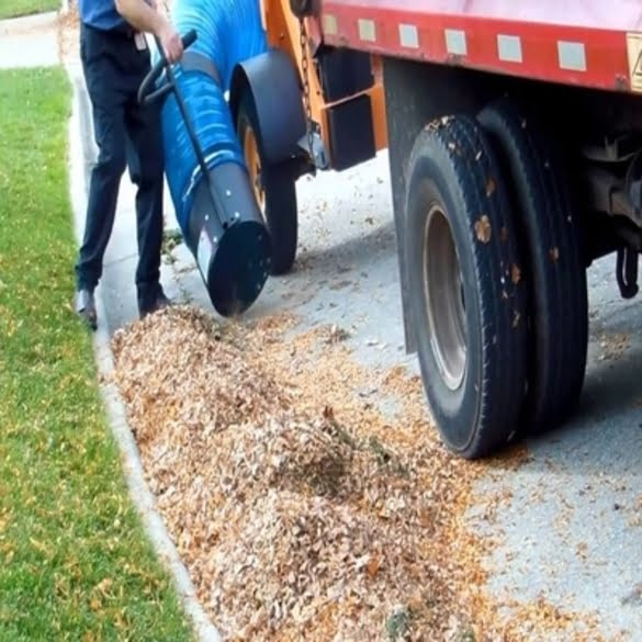 Leaf Removal   Lawn & Pest Control Xperts