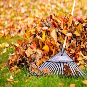 lawn cleanup kenosha, fall cleanup kenosha, kenosha fall lawn service