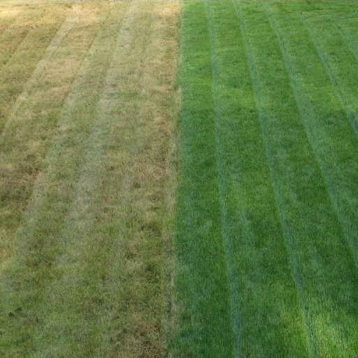 When it comes to lawn care, choose the Xperts! - Lawn Xperts