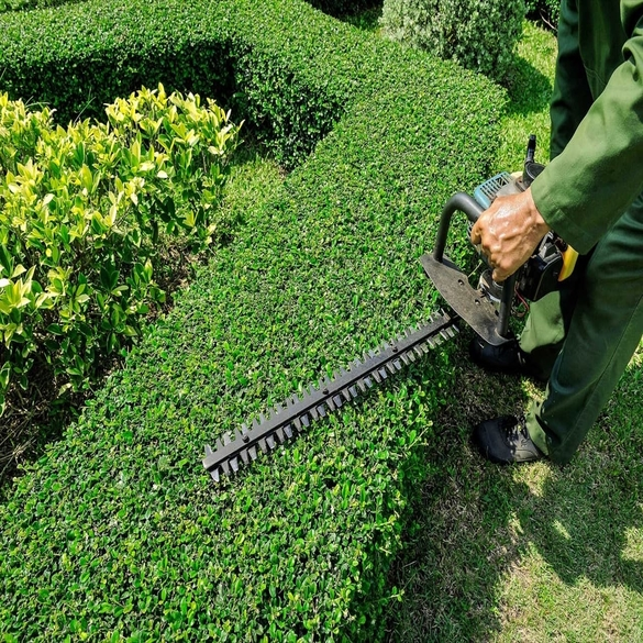 Lawn Hedges: Trees, Bushes & Shrubs