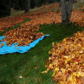 kenosha leaf removal service, leaf cleanup kenosha, kenosha leaf disposal